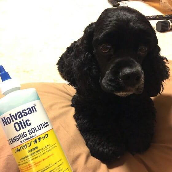 Smt 犬 ビクタス クリーム ビクタスSMTクリームとヒビクス軟膏の違い・共通点・購入先について[犬の皮膚炎]